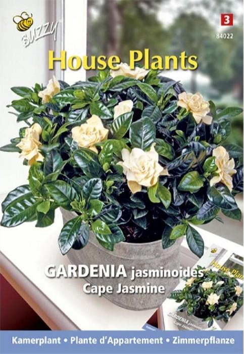 Gardenia Kaapse jasmijnGardenia jasminoides
