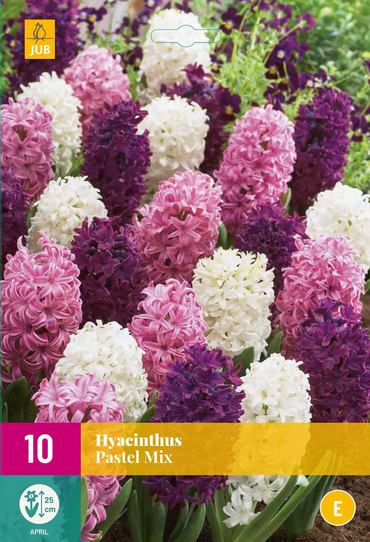 Hyacint Pastel mix