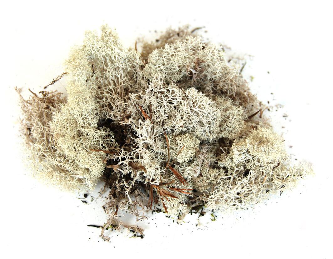 Ijslands mos 150 g Naturel