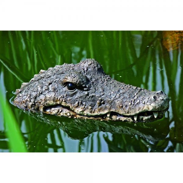 Krokodil drijvend