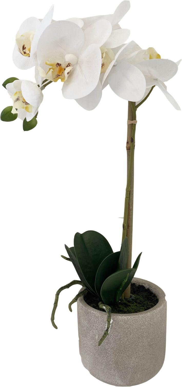 Kunstplant Phalaenopsis orchidee 1 tak witgeel