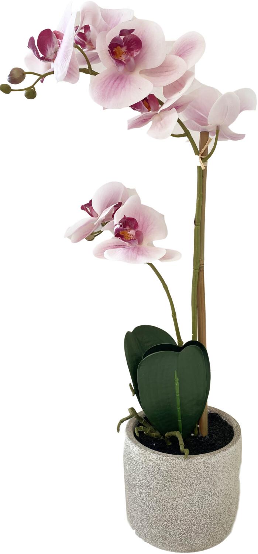 Kunstplant Phalaenopsis orchidee 2 takken witroze