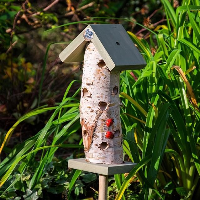 Lieveheersbeeststam op paalNational Trust