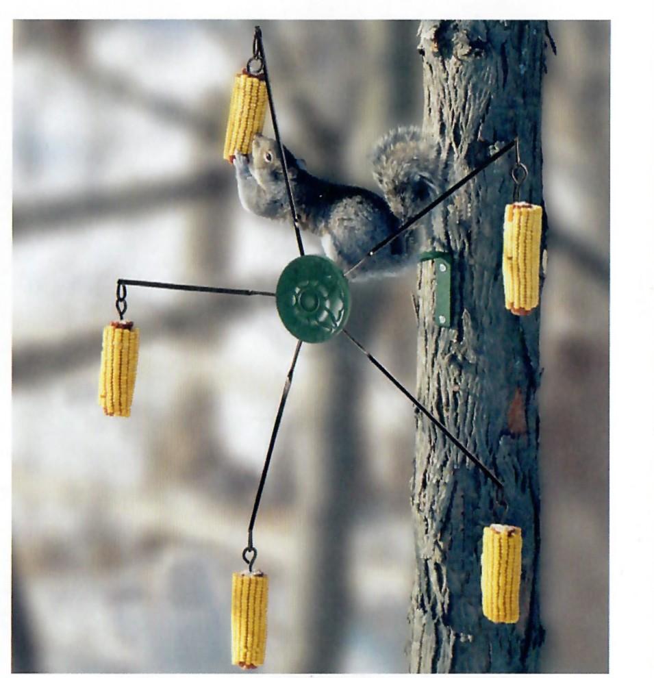Masmolen voor eekhoorns
