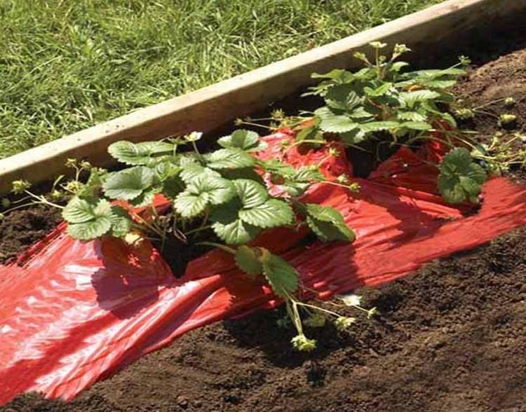 Mulchfolie rood aardbeien en tomaten