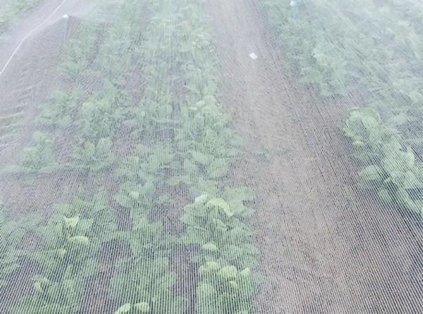 Insectengaas klimaatdoek 2 m x 10 m