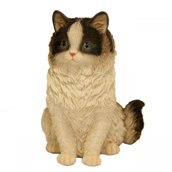 Prachtig katje beeld