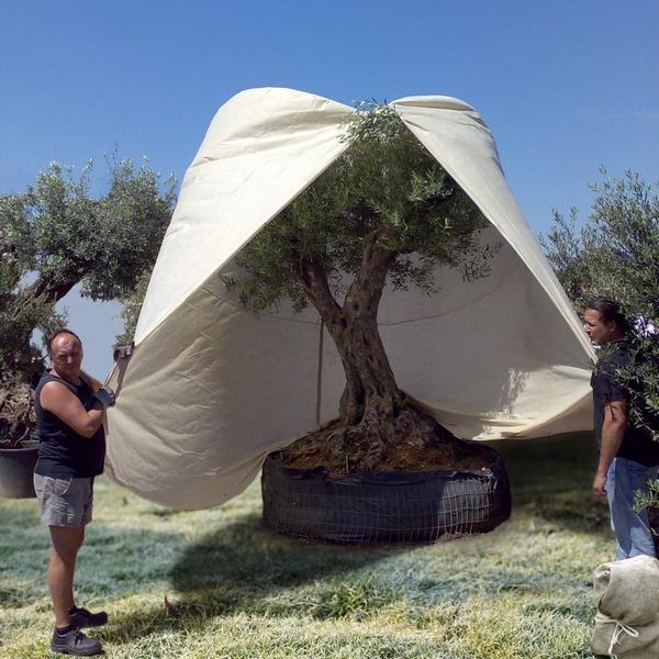 Reuzehoes vorstgevoelige planten 25 x 36 m