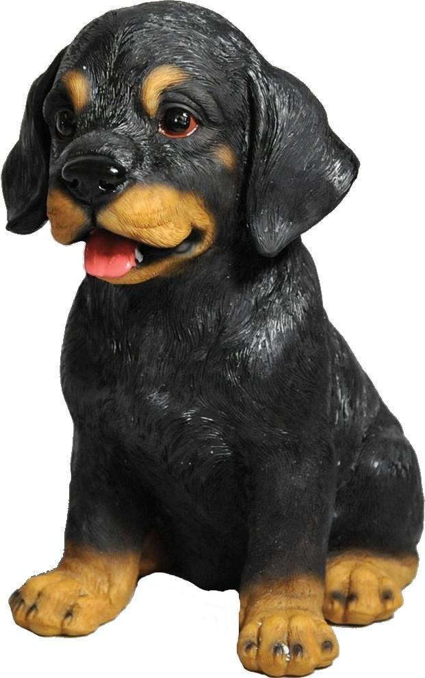 Rottweiler pup Maxlevensecht