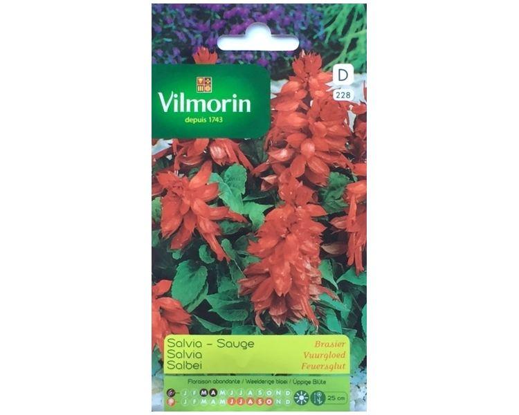 Salvia VuurgloedSalvia splendens