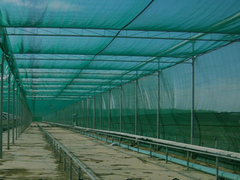 Schermgaas schaduwdoek AVOIDA Groen 2 m breed