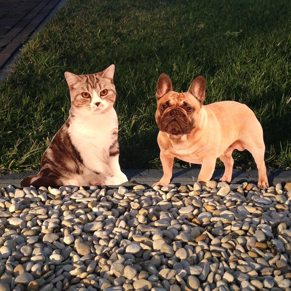 Silhouet kat en hond