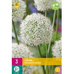 Allium Mount Everest (5 stuks)