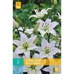 Lilium Aziatisch - witte Aziatische lelies (2 stuks)