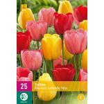 Tulpenmix 'Darwin Hybride' (25 stuks)