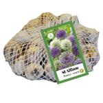 Allium paars/wit voor 1 m²