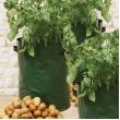Aardappel kweekzak