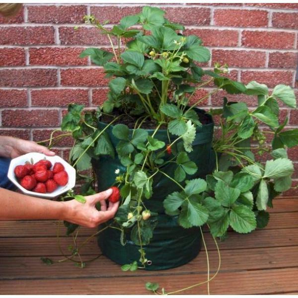 Plantzak voor kruiden aardbeien of groenten online kopen tuinadvies - Groenten in potten op balkons ...
