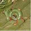 slakken vangen bestrijden