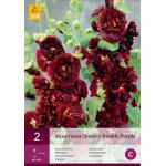Alcea rosea 'Chater's Double Purple' (2 stuks)