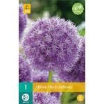 Allium His Excellency - sierui (1 stuks)