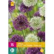 Allium Paars/Wit Mix