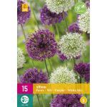 Allium Paars/Wit Mix - sierui (15 stuks)