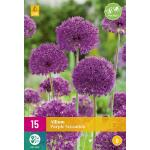 Allium Purple Sensation - sierui (15 stuks)