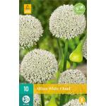 Allium White Cloud - sierui (10 stuks)