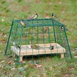 Beschermkooi voor kleine tuinvogels
