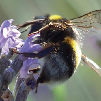 Bijen bloemenmengsel