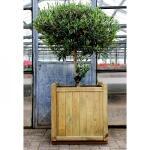 Bloembak FICUS 234 liter - hout