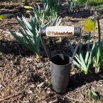 Bollenplanter gesmeed - Ø 60 mm