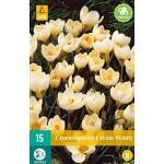Crocus Cream Beauty - kleinbloemige krokus (15 stuks)