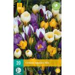 Crocus species mix - kleinbloemige krokus mix (20 stuks)