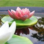 Waterlelies drijvende vijverdeoratie (2 stuks)