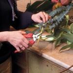 Dunschaar Felco 310 - bloemen en vruchten