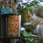Metalen voederhuis voor eekhoorn