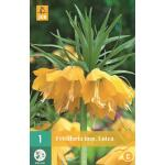 Fritillaria imperialis Lutea - keizerskroon