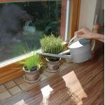 Gieter zink voor binnenshuis - 1,6 liter