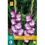 Grootbloemige gladiolen Nori