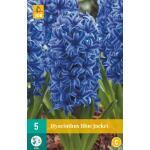 Hyacint Blue Jacket - blauw (5 stuks)