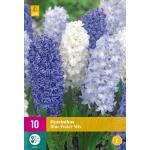 Hyacint Blue Water - mix wit en blauw (10 stuks)