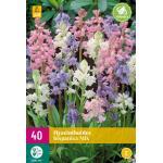 Hyacinthoides hispanica - boshyacint mix  (40 stuks)