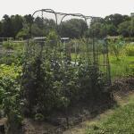 Inloopkooi met gaas voor gewassen - 130 x 180 x 205 cm