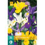 Iris hollandica - mix (25 stuks)