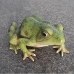 Kikker Kiki groen of bruin