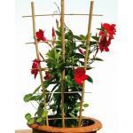Klimrek bamboe 37 x 77cm