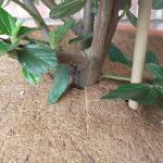 Kokos 2-delige afdekring 45 cm