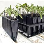 Kweektray Deep Roots - 40 cellen